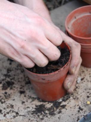 seed propagate